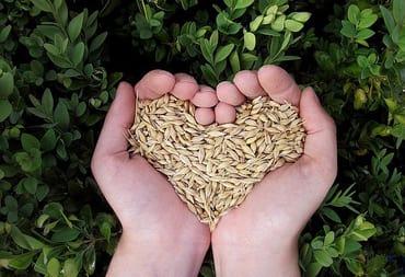 heart-grain